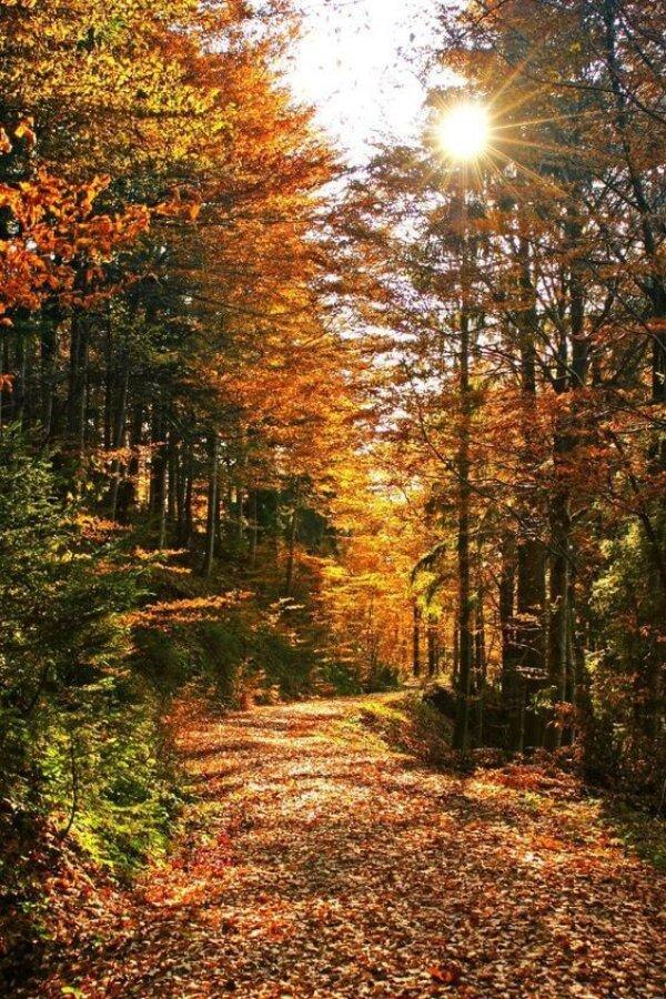 Велопоездка через ноябрьские леса в сторону Сенного