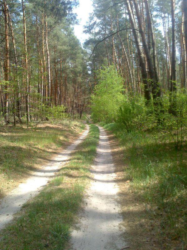 Покатушка в Краснополье новым лесным маршрутом!